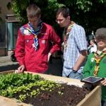 Pfadfinder spendierten mobile Gemüsebeete