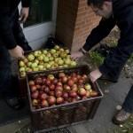 Die Apfelernte der Freien Pfadfinderschaft