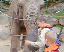 Wenn Wölfe die Elefanten füttern