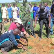 Über 2600 Bäume für Kenia – der Wald passt in einen Bus