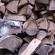 Holz-Diebstahl: Pfadfinder unter Verdacht