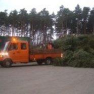 Über 10.000 Bäume: Neumarkt Sieger der Tannenbaum-Challenge!
