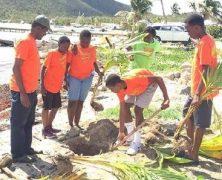 Pfadfinder pflanzen Kokospalmen