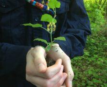 Zeit zum Bäume pflanzen!